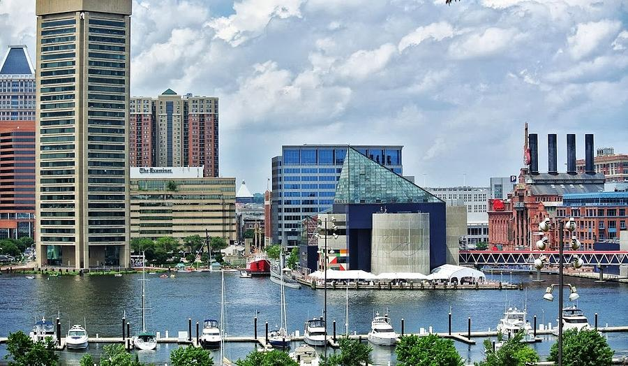 Baltimore Photograph - Scene From Federal Hill In June by Toni Martsoukos