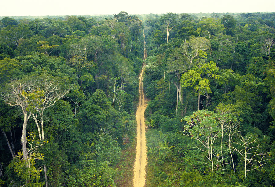 Scenic of a bordered road on remote place of the brazilian amazon. Photograph by Luis Veiga