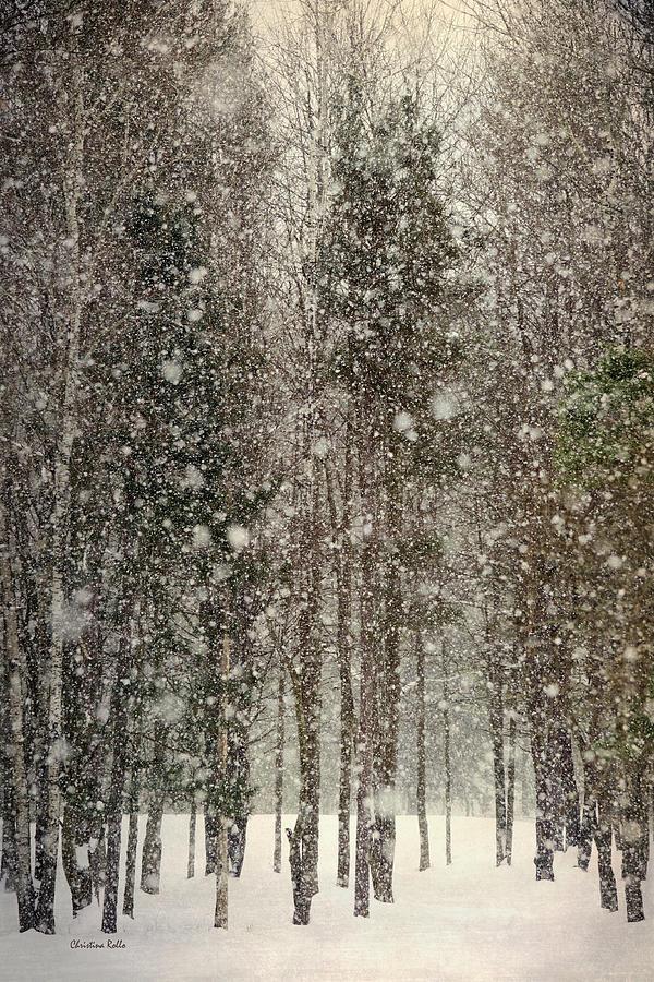 Winter Photograph - Scenic Snowfall by Christina Rollo