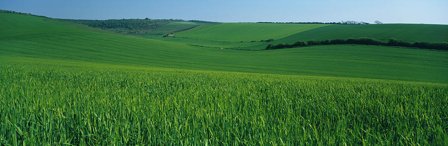 Horizontal Photograph - Scenic View Of A Field, South Downs by Panoramic Images