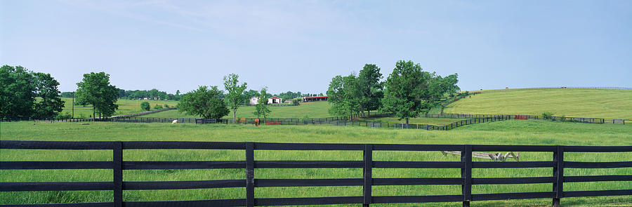 Horizontal Photograph - Scenic View Of Horse Farm, Woodford by Panoramic Images
