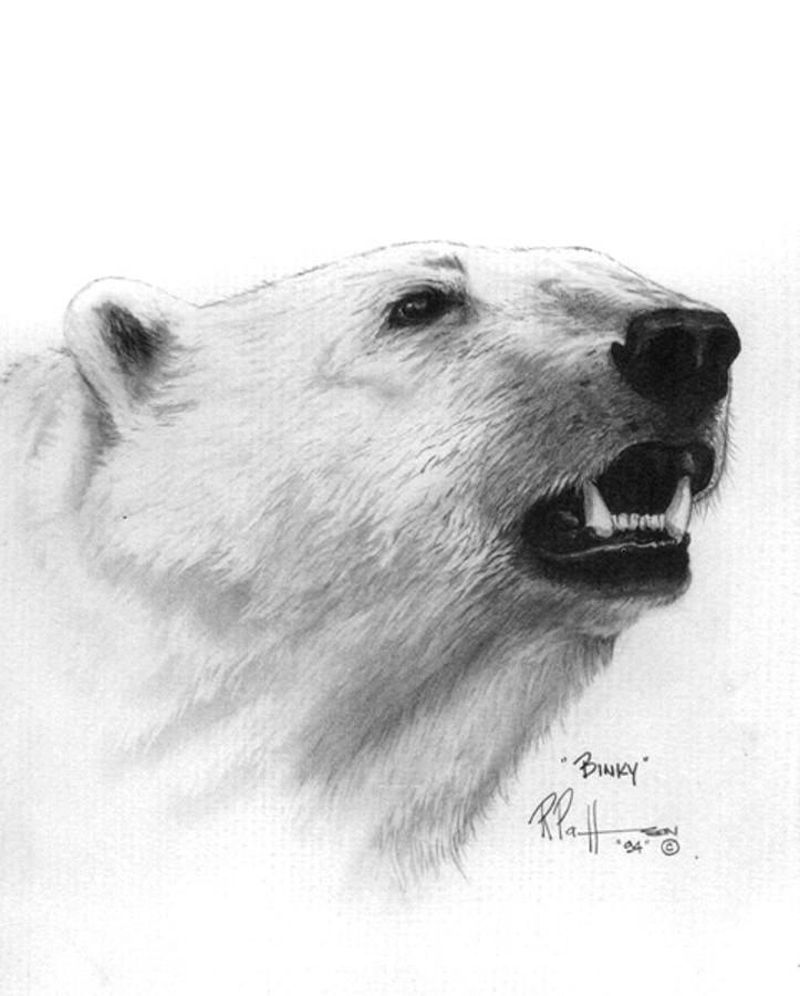 Wildlife Drawing - Scent In The Air Polar Bear by Bob Patterson
