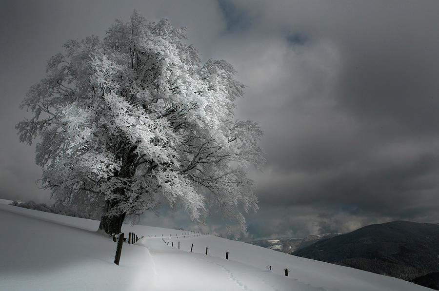 Winter Photograph - Schneeweg by Nicolas Schumacher