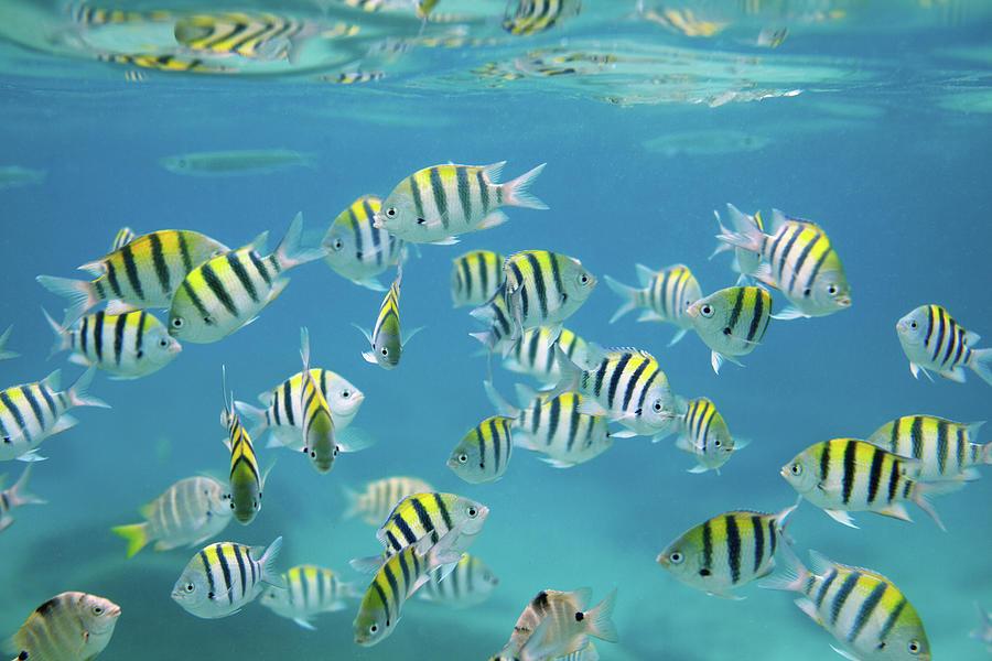 School Of Fish Photograph by Danilovi