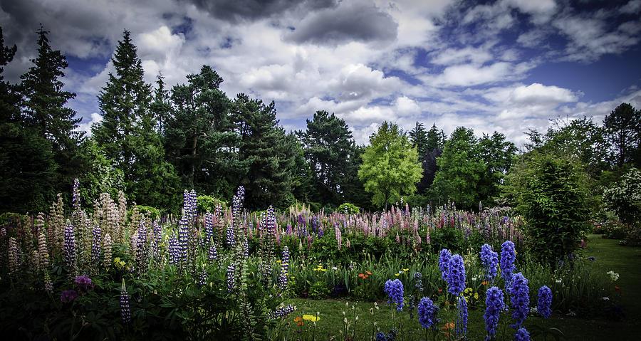 Schreiners Iris Gardens Photograph By Dutch Ducharme