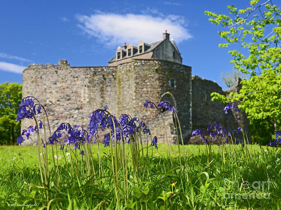 Scotland Dunstaffnage Castle Photograph - Scots Spring Bluebell Flowers At Scotland Dunstaffnage Castle  by Nature Scapes Fine Art