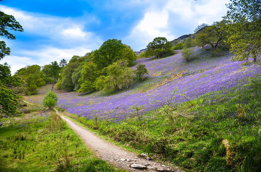 Adventure Photograph - Scottish Bluebells On The Hillside by Alex Zorychta