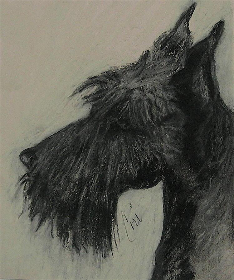 Drawing Drawing - Scottish Delight by Cori Solomon