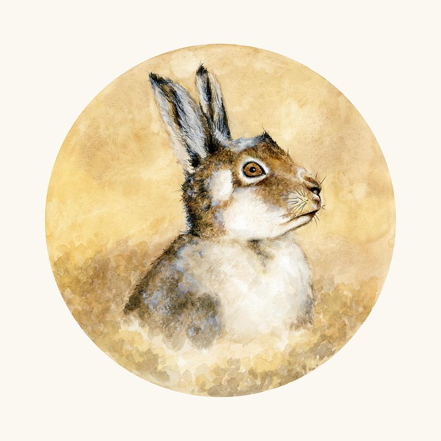 Scottish Hare Painting - Scottish Hare by Nathalie Amber