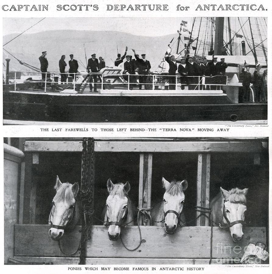 History Photograph - Scotts Departure For Antarctica Ponies by Mary Evans
