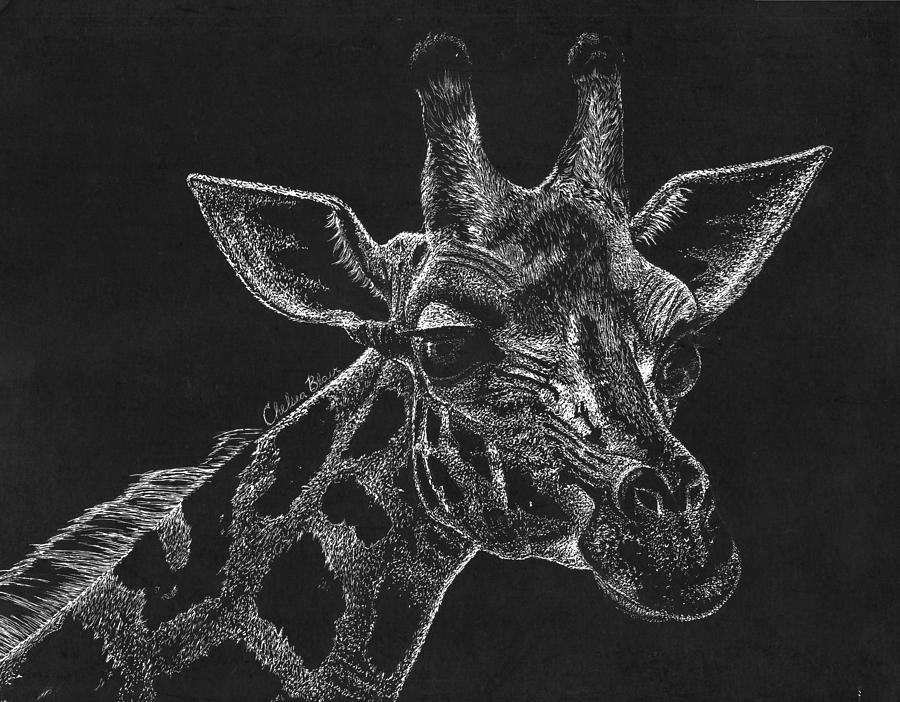 Scratch Giraffe Drawing By Chelsea Blair