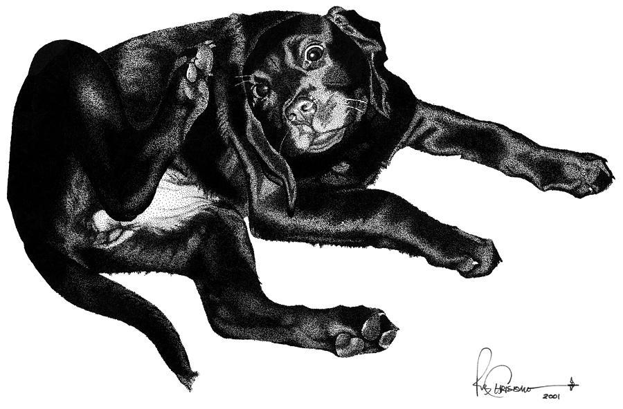 Dog Drawing - Scratching Lab by Rob Christensen