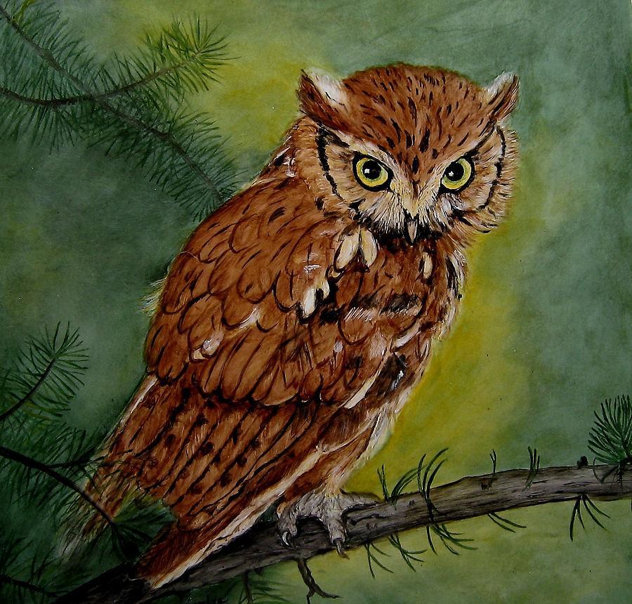 Screech Owl Painting By Sandra Maddox