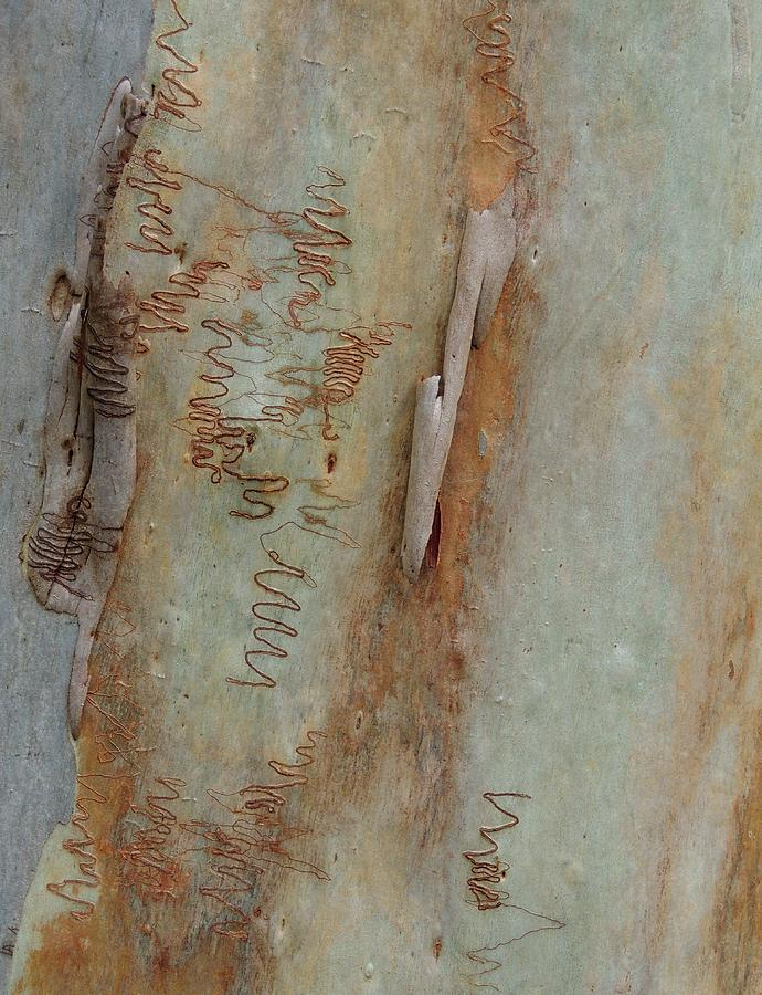 Eucalyptus Photograph - Scribbled Abstract by Denise Clark