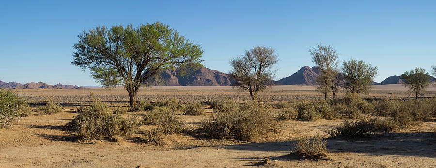 Color Image Photograph - Scrub Bushes And Trees With Hills by Panoramic Images
