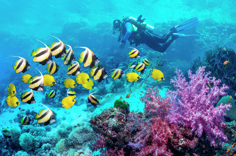 Scuba Diver With A School Of Coral Reef Photograph by Georgette Douwma