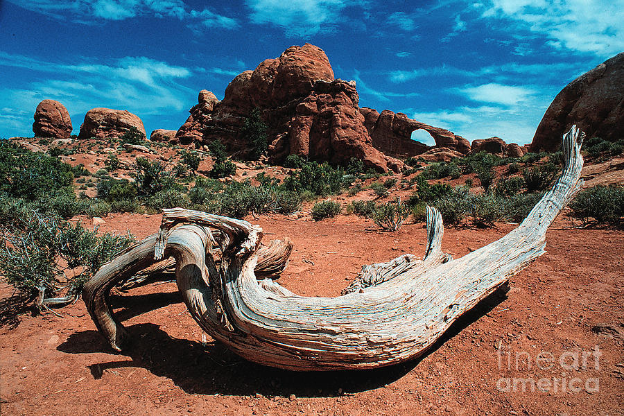 Landscape Photograph - Sculpture Wilderness Landscape by Kim Lessel