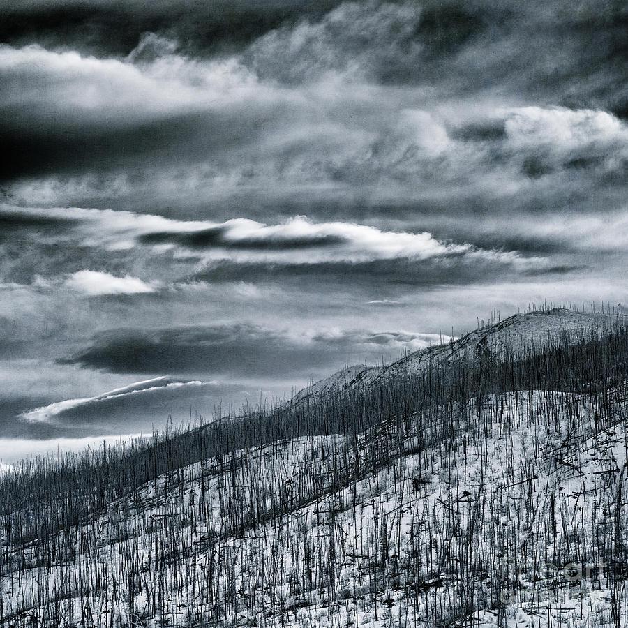 Caribou Photograph - Roam Free by Priska Wettstein