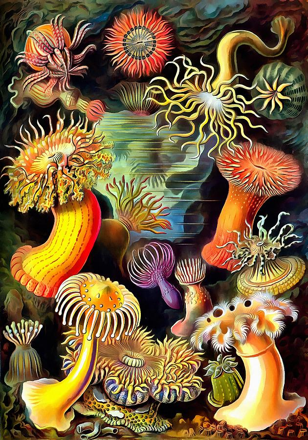 Sea Anemones Painting - Sea Anemones by Ernst Haeckel