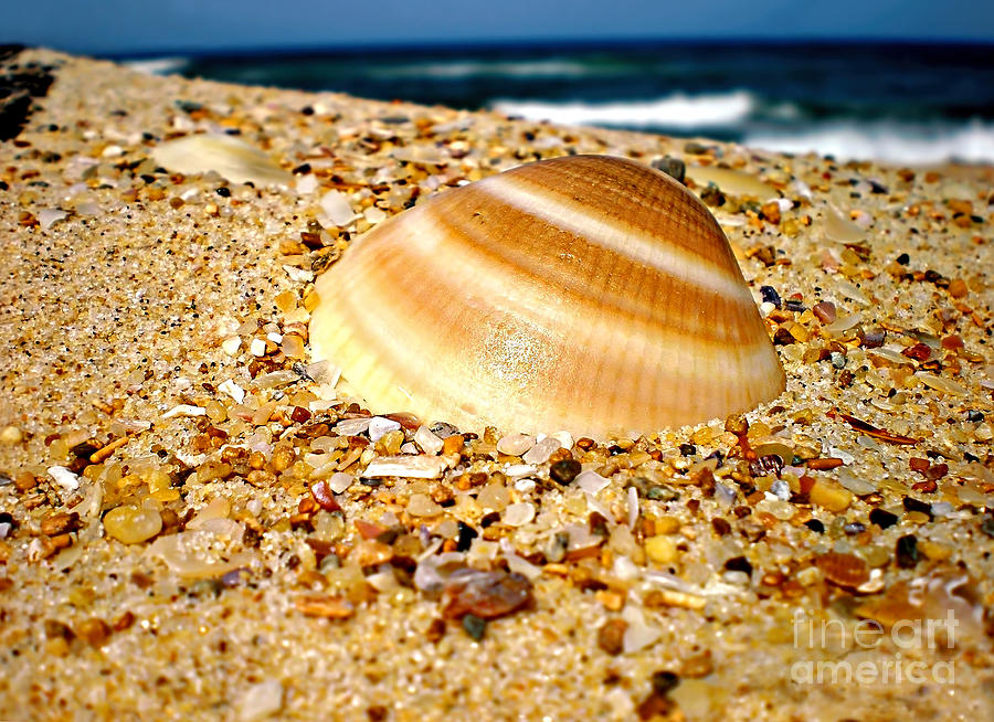 Shell Photograph - Sea Beyond The Shell by Kaye Menner