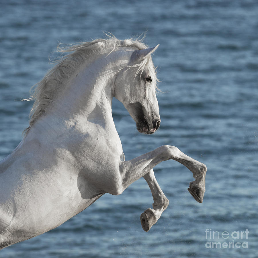 Sea Horse Rearing Photograph by Carol Walker