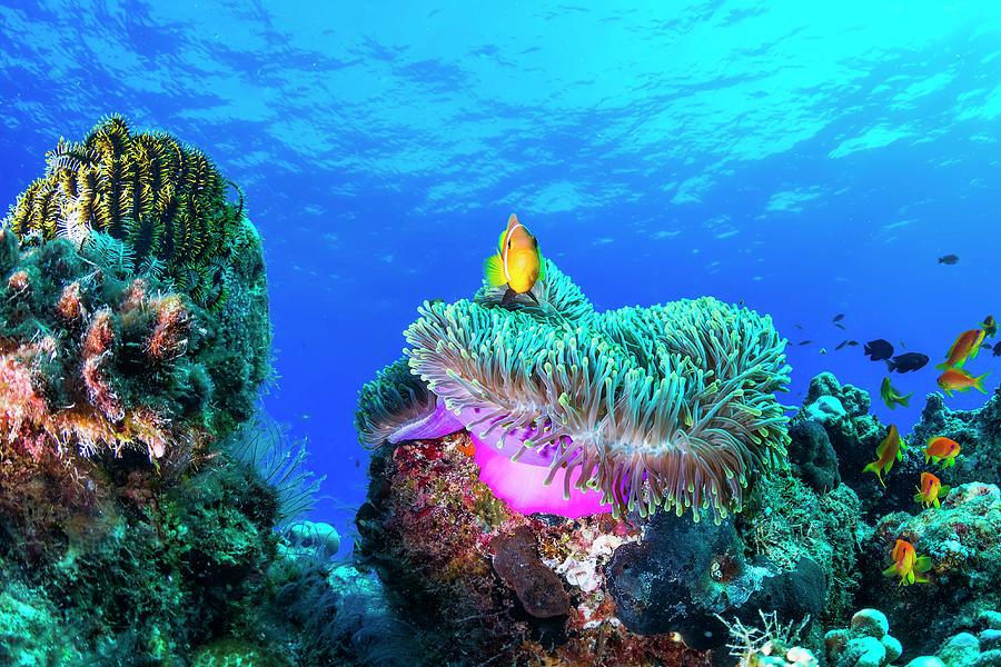Underwater Photograph - Sea Life by Roberto Marchegiani