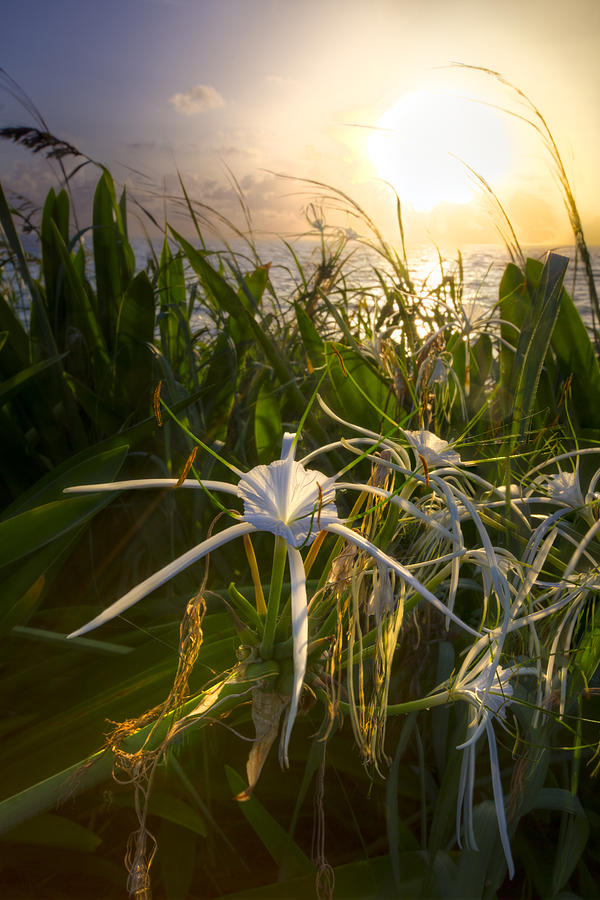 Clouds Photograph - Sea Lily by Debra and Dave Vanderlaan