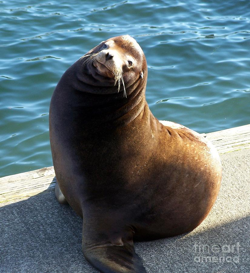 Sea Lion Photograph - Sea Lion Basking In The Sun by Chalet Roome-Rigdon
