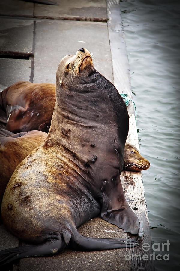 West Coast Photograph - Sea Lion by Robert Bales