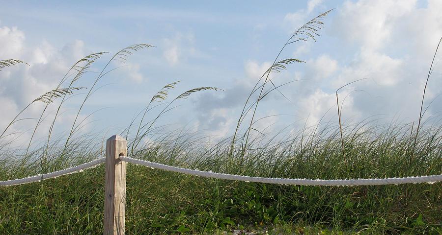 Seascape Photograph - Sea Oat Garden by Rosie Brown