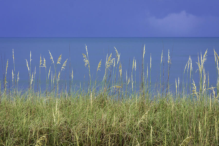 4th Photograph - Sea Oats By The Blue Ocean And Sky by Karen Stephenson