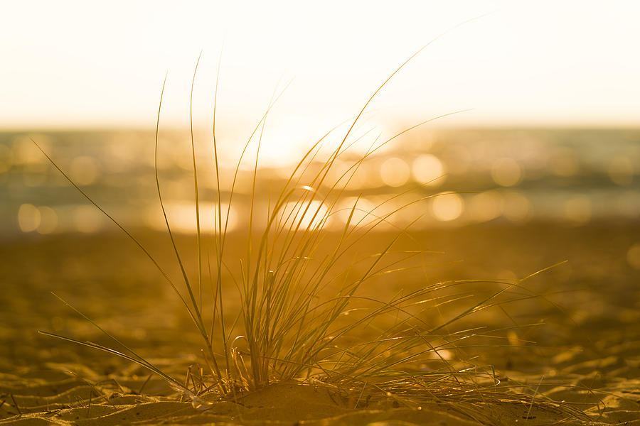 Sea Oats Sunset by Sebastian Musial