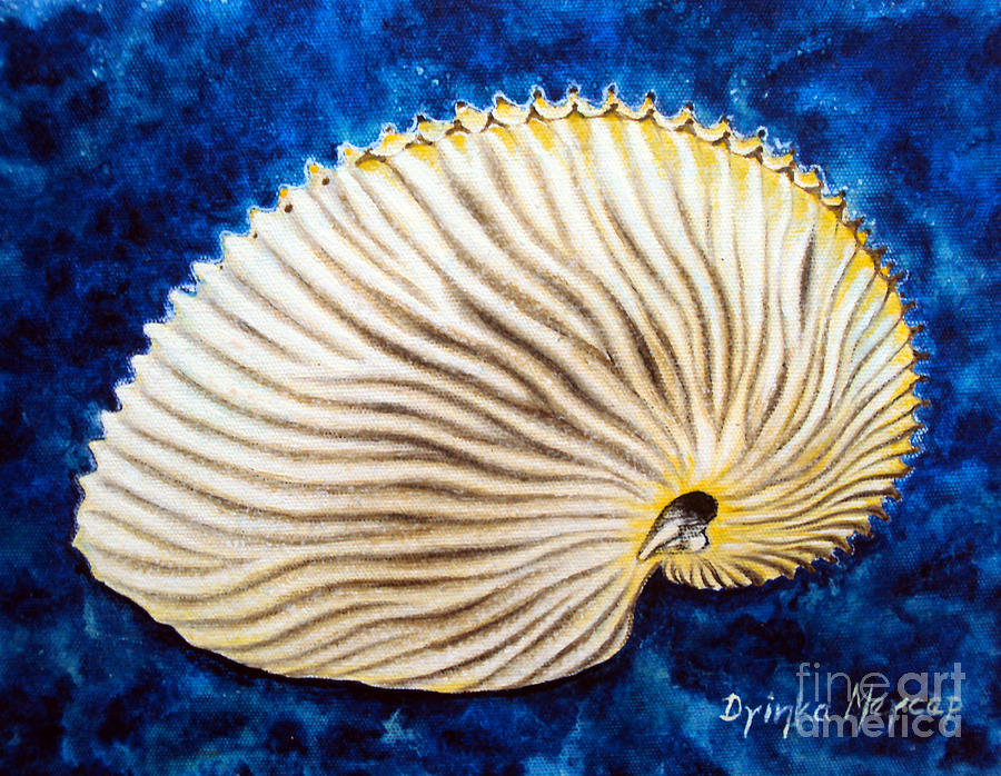Modern Art Shell Painting - Sea Shell Original Oil On Canvas No.2. by Drinka Mercep