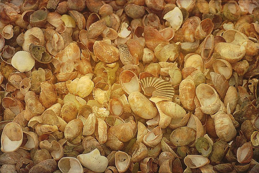 Beach House Photograph - Seashells Red River Beach Harwich Cape Cod Ma by Suzanne Powers