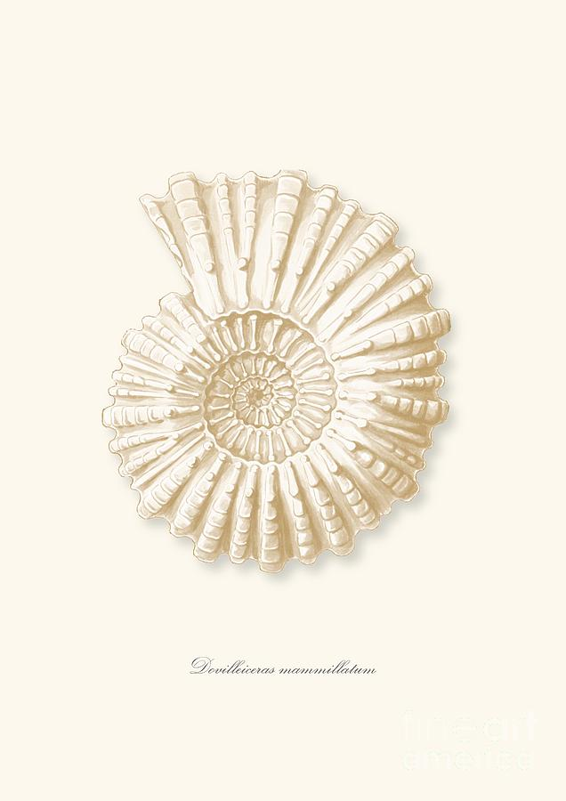 Sea Shell White French Vintage Drawing By Patruschka