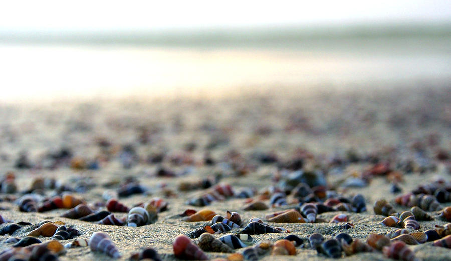 Shells Photograph - Sea Shells By The Sea Shore by Kaleidoscopik Photography