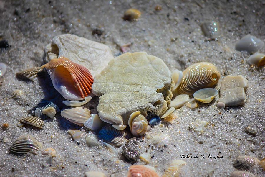 Sea Shells Photograph - Sea Shells by Deborah Hughes