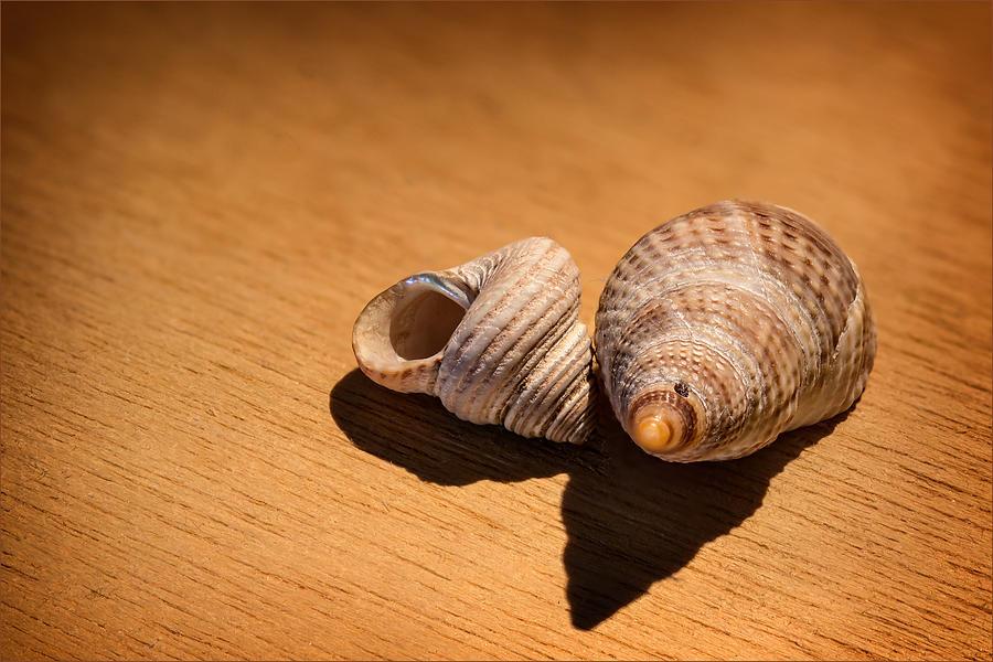 Ocean Photograph - Sea Shells_3 by Joe Hudspeth