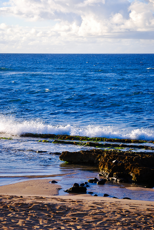 Hawaii Photograph - Sea Shelves by Christi Kraft
