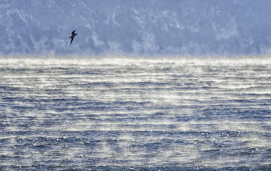 Sea Smoke and Gull Blues by Marty Saccone