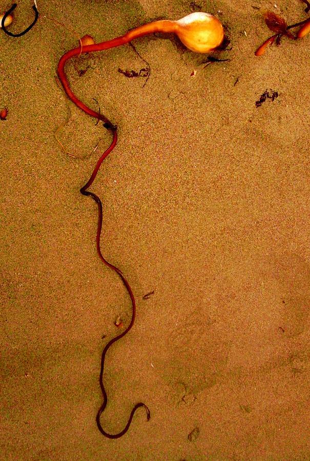 Sand Photograph - Sea Sperm by Sharon Costa
