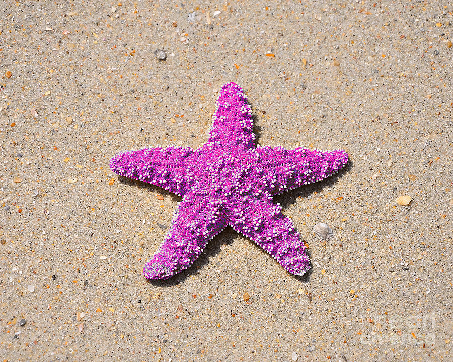 Sea Star - Pink Photograph by Al Powell Photography USA