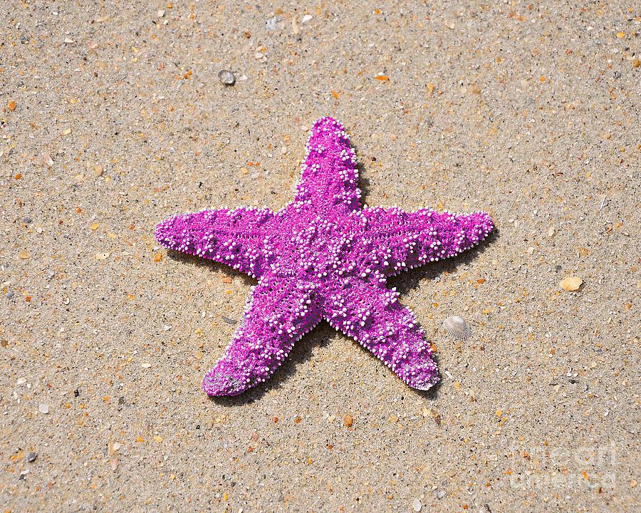 Sea Star Photograph - Sea Star - Pink by Al Powell Photography USA