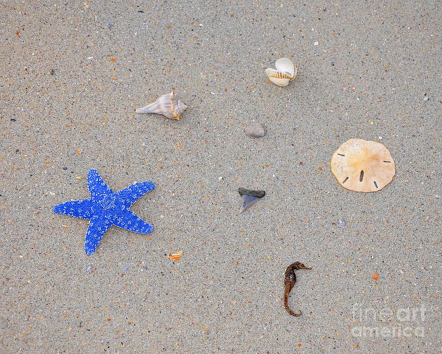 Sea Star Photograph - Sea Swag - Dark Blue by Al Powell Photography USA