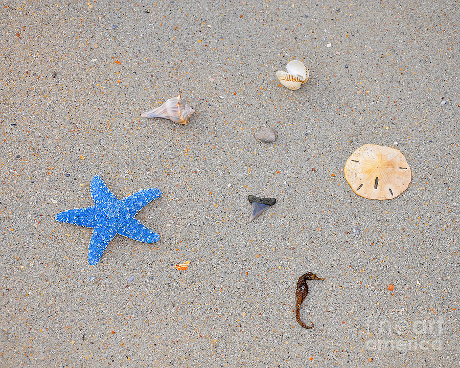 Sea Star Photograph - Sea Swag - Light Blue by Al Powell Photography USA
