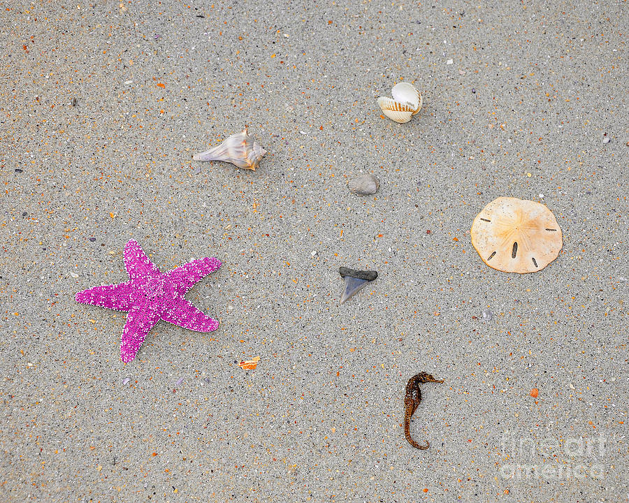 Sea Star Photograph - Sea Swag - Pink by Al Powell Photography USA