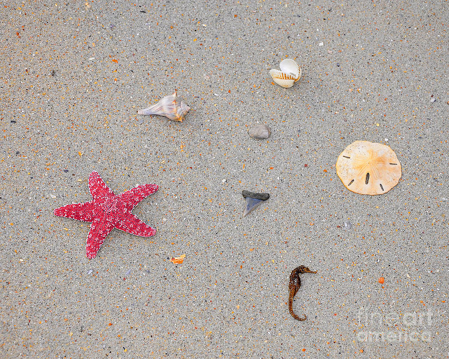 Sea Star Photograph - Sea Swag - Red by Al Powell Photography USA