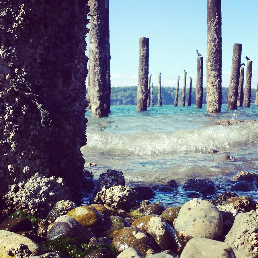 Pilings Photograph - Sea Therapy by Andrea Osborn