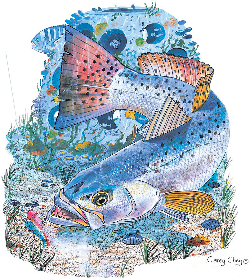 Trout Painting - Sea Trout Wreck by Carey Chen