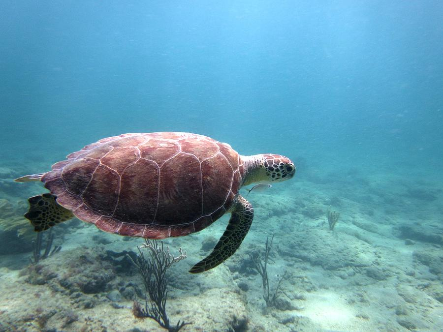 Sea Turtle Photograph - Sea Turtle 5 by Daniel Smith
